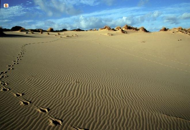 Tracce di cervo sardo sulle dune di Piscinas - Foto di D. Ruiu